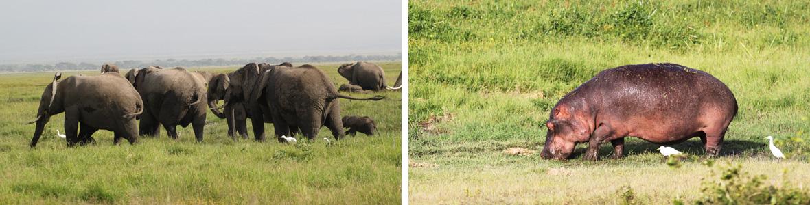 парки кении