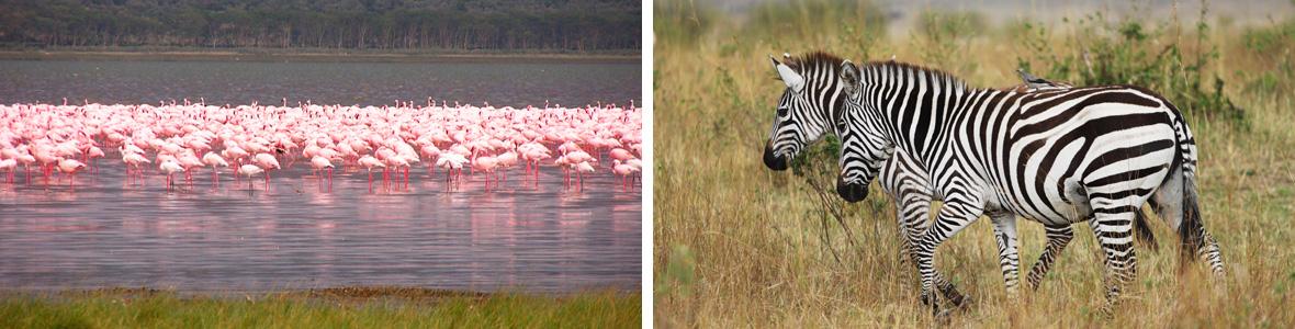 Кения туры